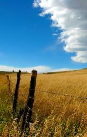 Prairie_cropped