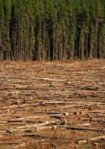 deforestation_000008670268XSmall
