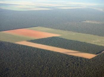 Making room for biofuels destroys huge swaths of forests.