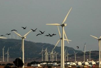 bird turbines
