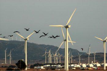 birds wind blades energy