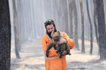 bushfires saving animals