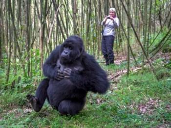 virunga gorilla reserve