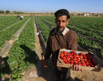 middle eastern crops