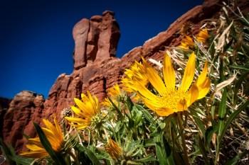 desert greens bloom