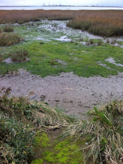 """Mesolithic revisited - """"Doggerland swamps"""". Photograph by Justina Hart"""