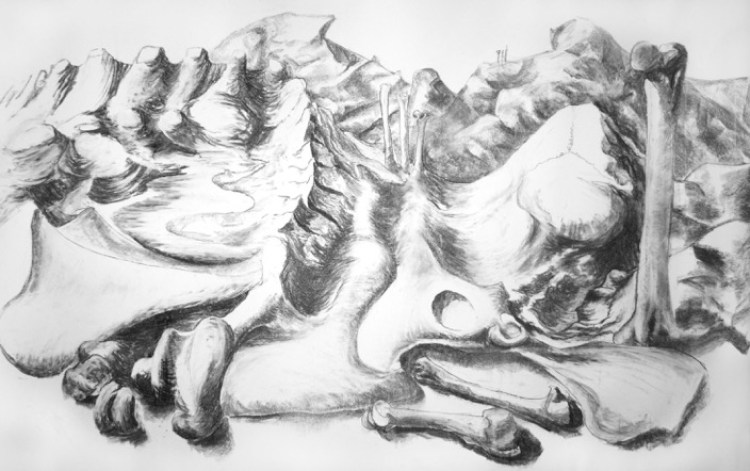 Bones: Bone Landscape, Jo Dacombe