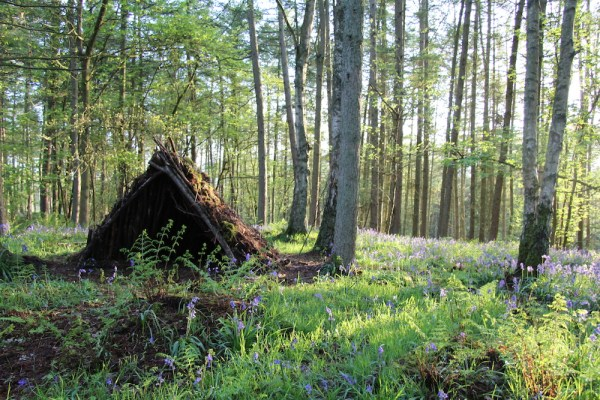 Bushcraft and survival in the woods