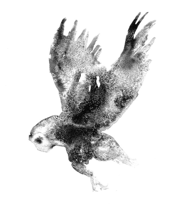 Presence: Showing 'Owl', from James Roberts's collection, 'Winged'