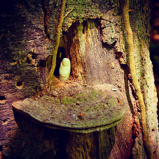 Fungus: Showing Dead Kids Fingers by Anthony Bennett