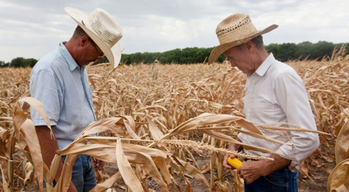 Climate_corn_drought_heat_wave