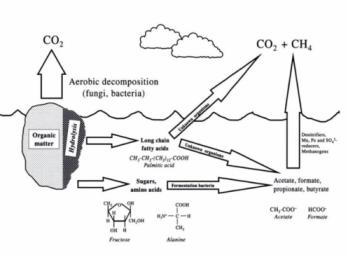 Organic matter decomposition pathways . Richardson and Vepraskas