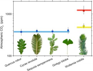 Model validation with extant species. Modeled ca (symbols; error bars span 16–84 percentiles) closely matches the value of ca in which the sample leaves grew (colored lines). Blue line represent current ambient atmospheric CO2 concentration in which Quercus robur, Cycas revoluta, Sequoia sempervirens, and Ginkgo biloba were growing under natural conditions outdoors; yellow and red lines represent, respectively, 480 and 1270 ppm atmospheric CO2 concentration inside coontrolled environment chambers where Wollemia nobilis was grown.