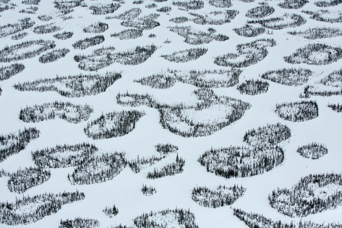 Patches of boreal forest intertwined with snow-covered muskeg, near McLelland Lake, Alberta, Canada.