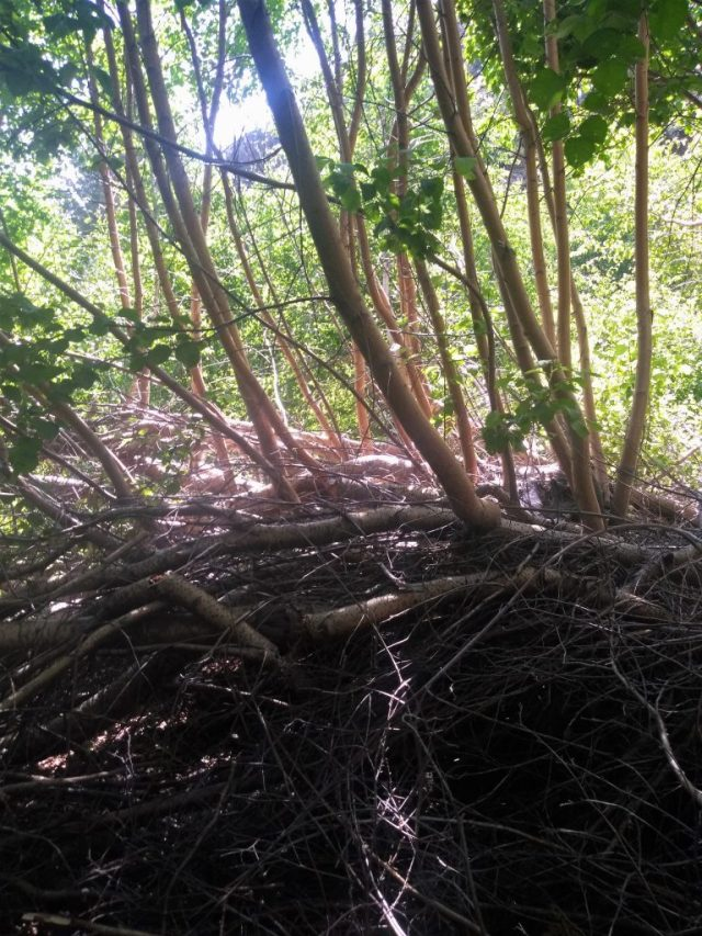 Climbing the Treetops
