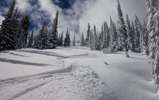 Sherman Pass Ski Tour