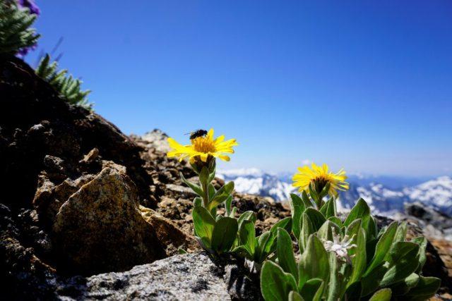 Snowfield Flower