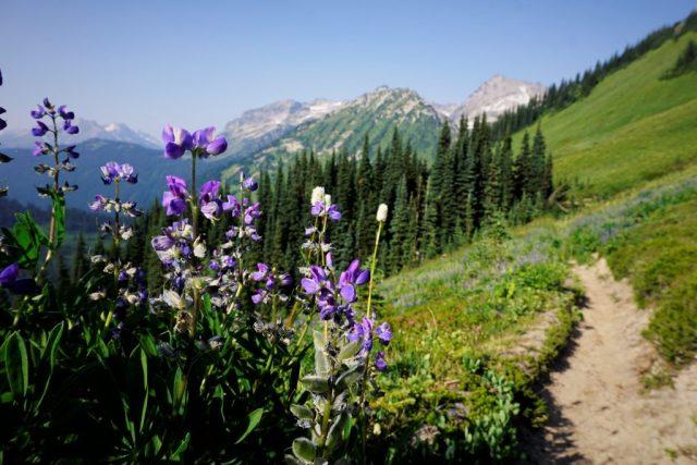 Buck Creek Flowers