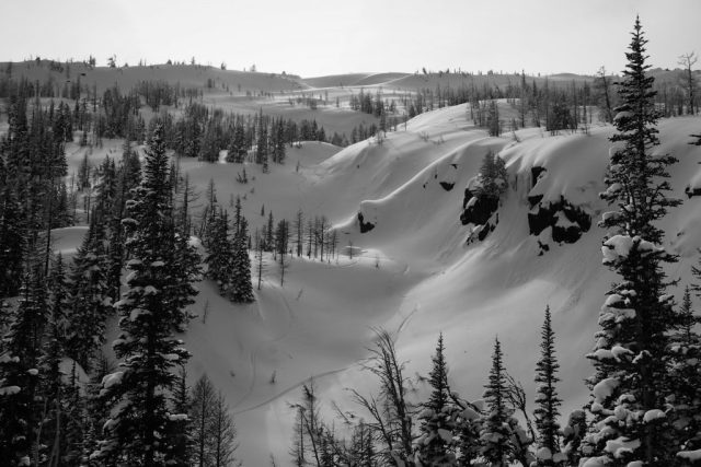 Tamarack Gully