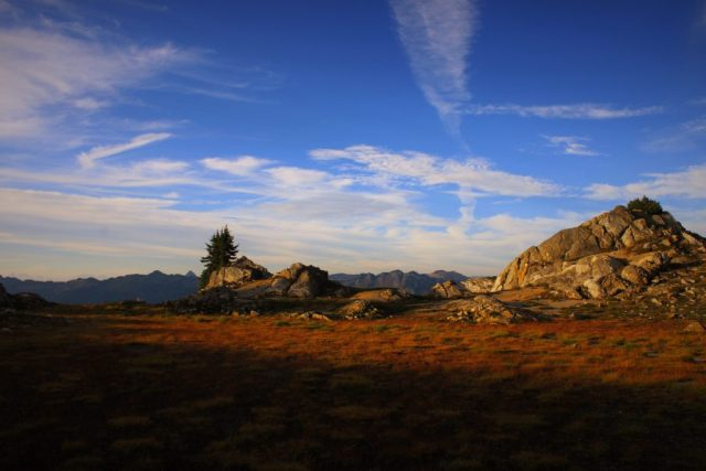Lost Ridge Meadow