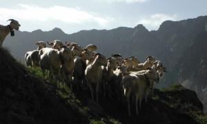 Mérens-les-Vals à Orlu, Ariège, Pyrénées, France 43