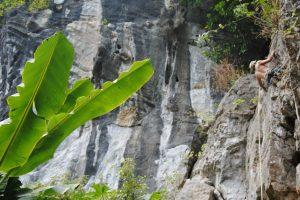 Butterfly Valley, Sport Climbing, Cat Ba Island, Vietnam 23