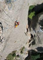 Drac Gos a l'agulle de Can Jorba, Montserrat, Espagne 11