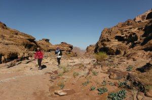 Rakabat Canyon, Jebel Um Ishrin, Wadi Rum, Jordanie 16