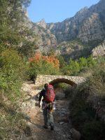 L'avi Trepador a la Codolosa, Montserrat, Espagne 5