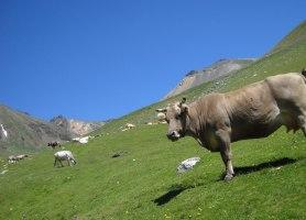 Torreneules por la Coma de Vaca, Queralbs, Catalunya, Espagne 3