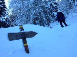Cagire hivernale, Le Mourtis, Ariège, France 26