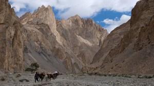 Zinchan, Markha Valley & Zalung Karpo La, Ladakh, Inde 23
