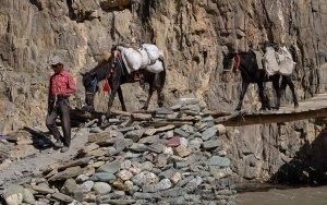 Zinchan, Markha Valley & Zalung Karpo La, Ladakh 49