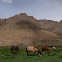 Zinchan, Markha Valley & Zalung Karpo La, Ladakh, Inde 80