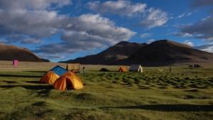 Tso Kar au Tso Moriri, Ladakh, Inde 10