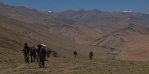Tso Kar au Tso Moriri, Ladakh, Inde 28
