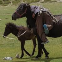 Tso Kar au Tso Moriri, Ladakh, Inde 40