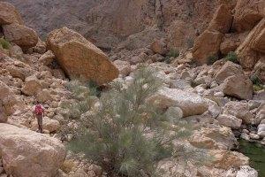 Wadi Naqma, Hajar Oriental 10