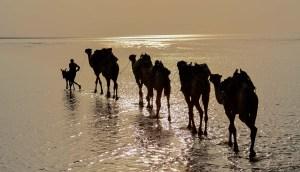 Les couleurs du sel, Danakil, Ethiopie 11