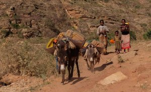 Harigwa Camp à Megab (2ème jour), Gheralta, Tigray, Ethiopie 14