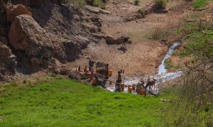 Harigwa Camp à Megab (2ème jour), Gheralta, Tigray, Ethiopie 19