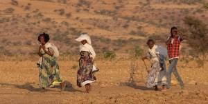 Harigwa Camp à Megab (2ème jour), Gheralta, Tigray, Ethiopie 68