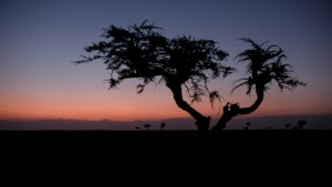 Harigwa Camp à Megab (2ème jour), Gheralta, Tigray, Ethiopie 74