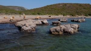 Sentier des douaniers, Macinaggio à Bargaggio, Corse 19