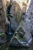 Piscia in Alba, Olivese 11
