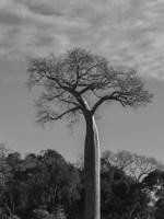 Begidro à Tsimafana, Tsiribihina, Morondava, Madagascar 41