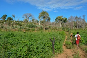 Begidro à Tsimafana, Tsiribihina, Morondava 48
