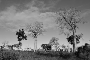 Begidro à Tsimafana, Tsiribihina, Morondava 52