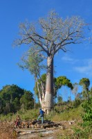 Begidro à Tsimafana, Tsiribihina, Morondava, Madagascar 53