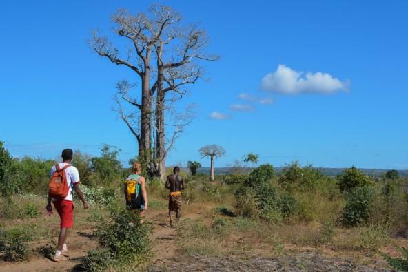 Begidro à Tsimafana, Tsiribihina, Morondava, Madagascar 1